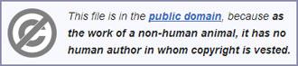 copyright-monkey-wikipedia.jpg